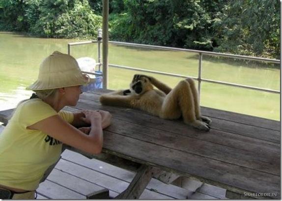 funny-animals003